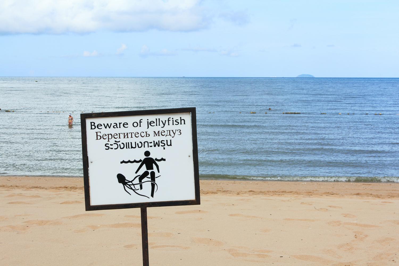 Jelly Fish: A Problem